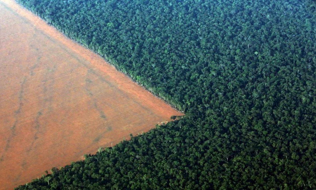 O Sínodo para a Amazônia e a invenção do verbo amazonizar